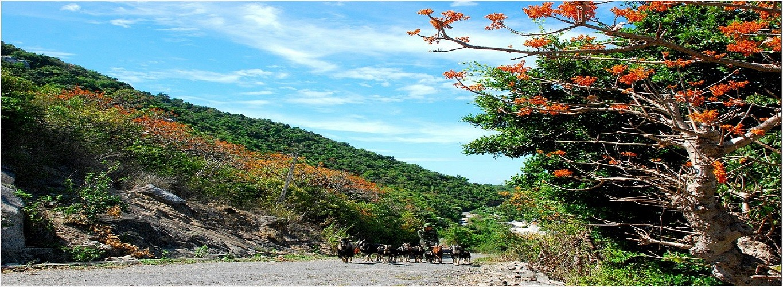 Ngày bình yên trên đảo - Tác giả Nguyễn Ngọc PhướcBan quản lý Khu bảo tồn biển Cù Lao Chàm